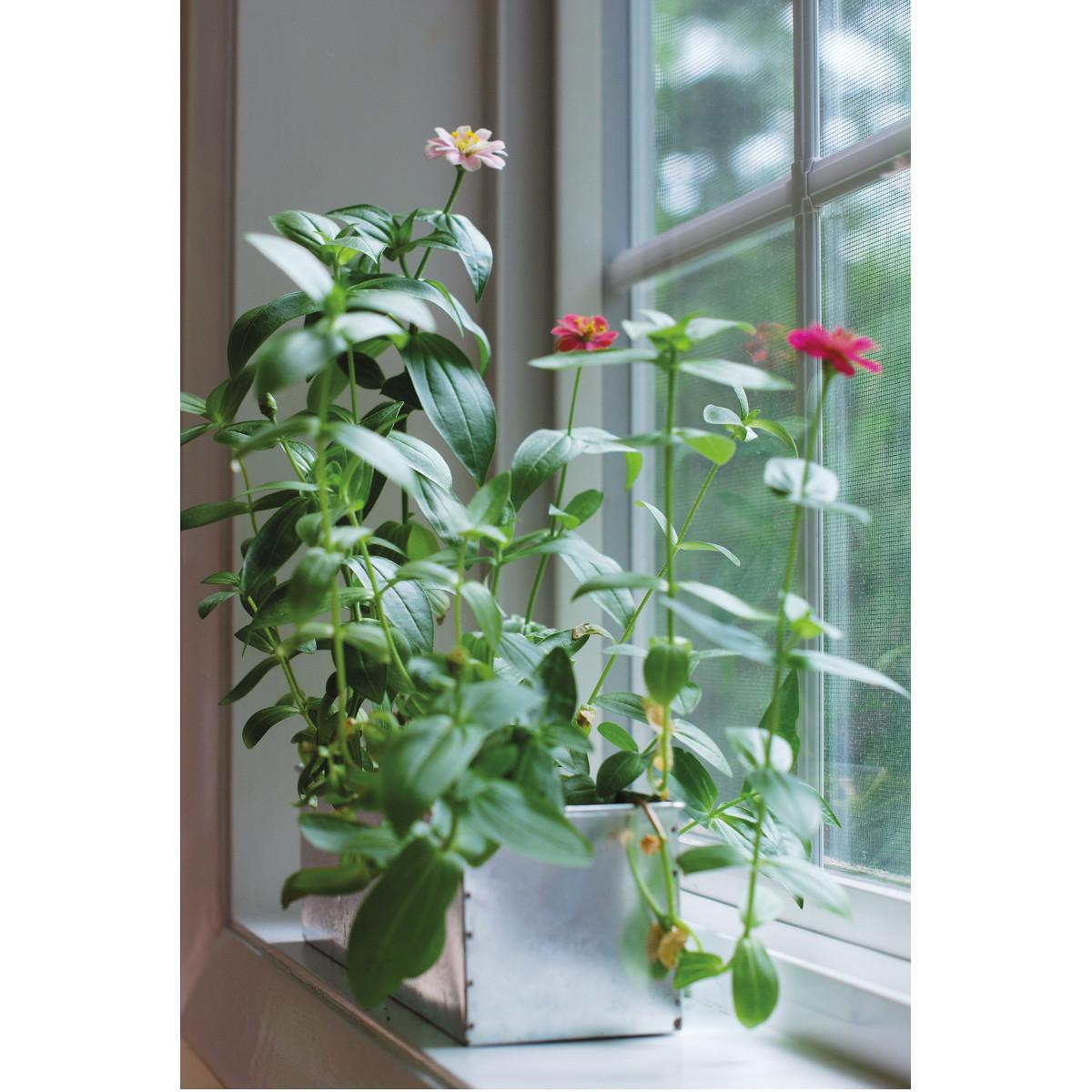 Blooming Garden kukkalaatikko