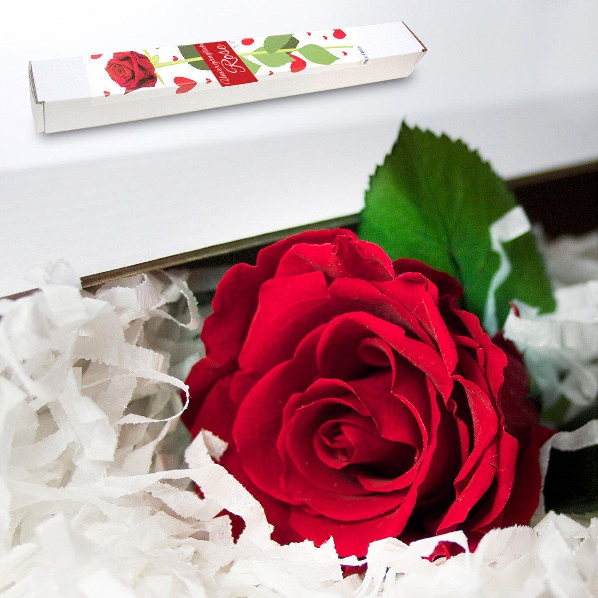 Ikuisesti kukkiva ruusu