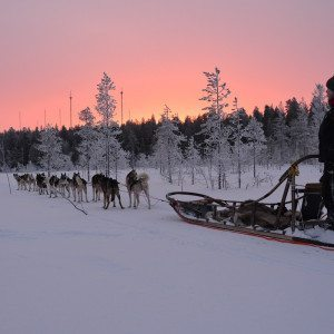 Huskysafari 5 km, Rovaniemi