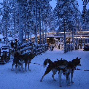 Huskysafari iltaretki 5 km, Rovaniemi