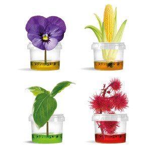 Original Plantarium ® Gardener Collection -ruukkukasvisetti