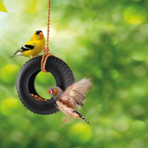 Rengaskeinu-lintulauta