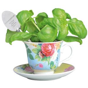 Teekuppi-basilikankasvatussetti